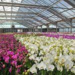 cal coast orchids