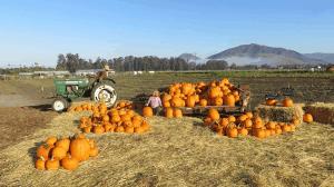 city farm slo fall harvest